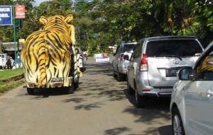Asli Tiger lads..!!
